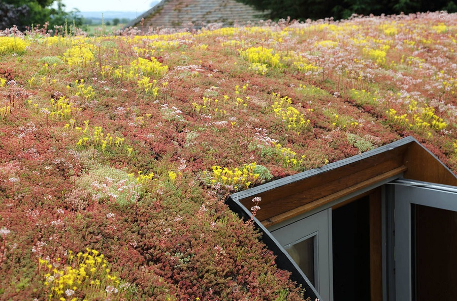 Want to Build a Green Roof? Read this.